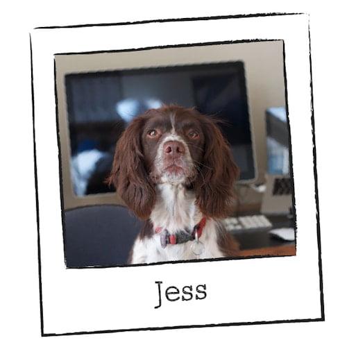 Jess the Office Dog